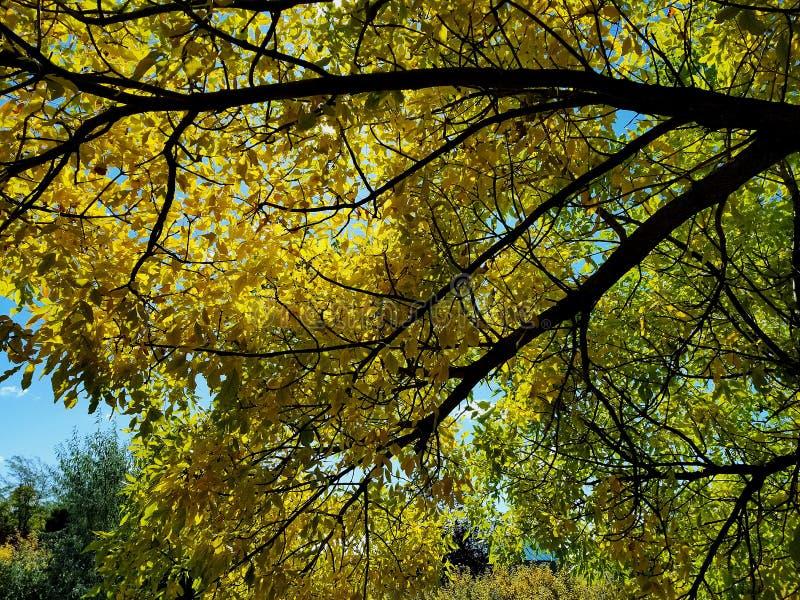 Il thro del cielo le foglie ed i rami cade fotografia stock