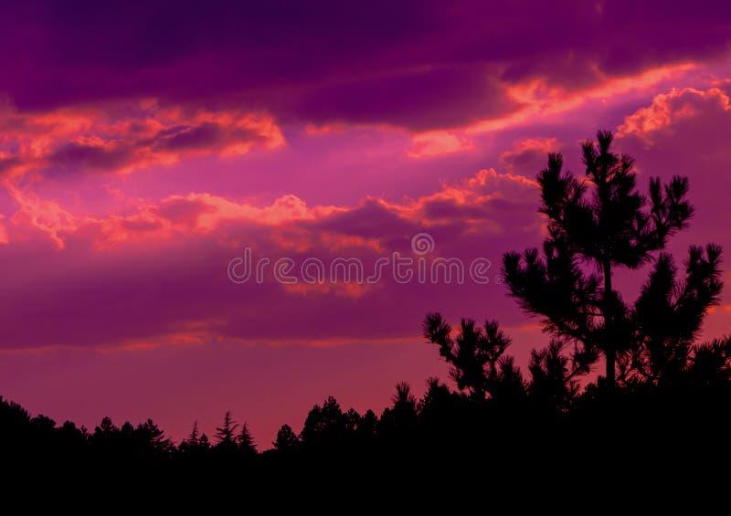 Il tramonto arancione scuro di colore si appanna la foto con la siluetta dell'abetaia immagini stock