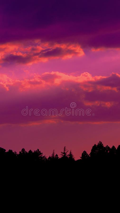 Il tramonto di colore scuro si appanna la foto con la siluetta dell'abetaia immagine stock