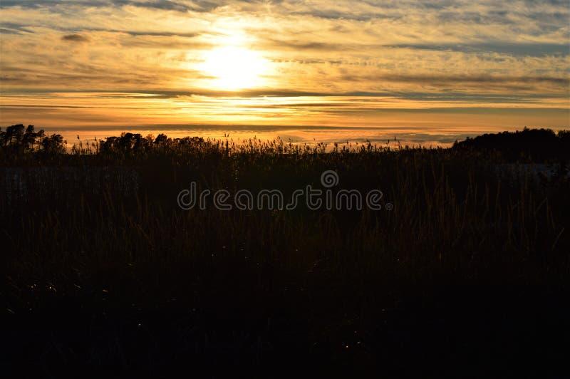 Il tramonto dietro le canne si avvicina all'oceano fotografia stock