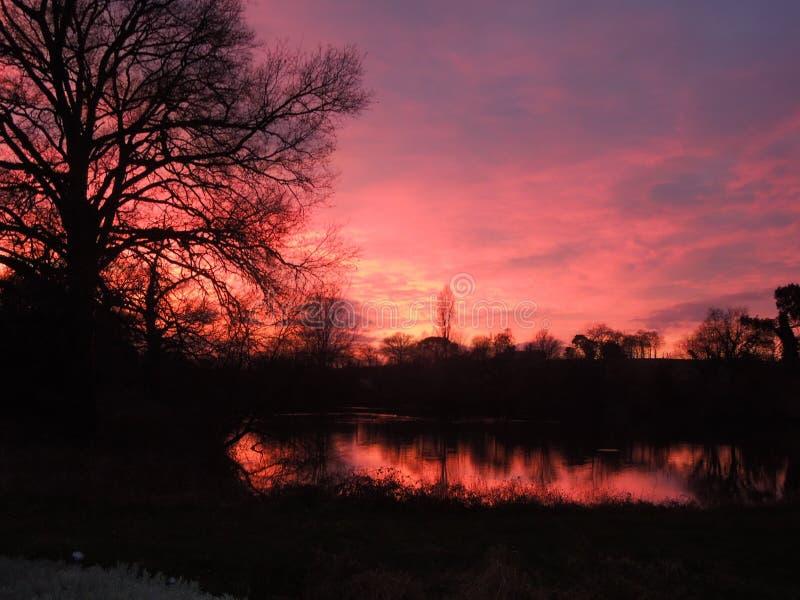 Il tramonto drammatico ha riflesso in un lago con la siluetta dell'albero immagine stock libera da diritti
