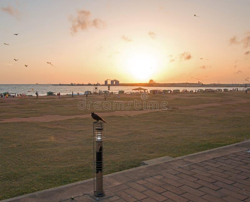 Il tramonto ed il corvo a Galle affrontano l'area urbana fronte mare del parco in Colombo Sri Lanka fotografia stock libera da diritti