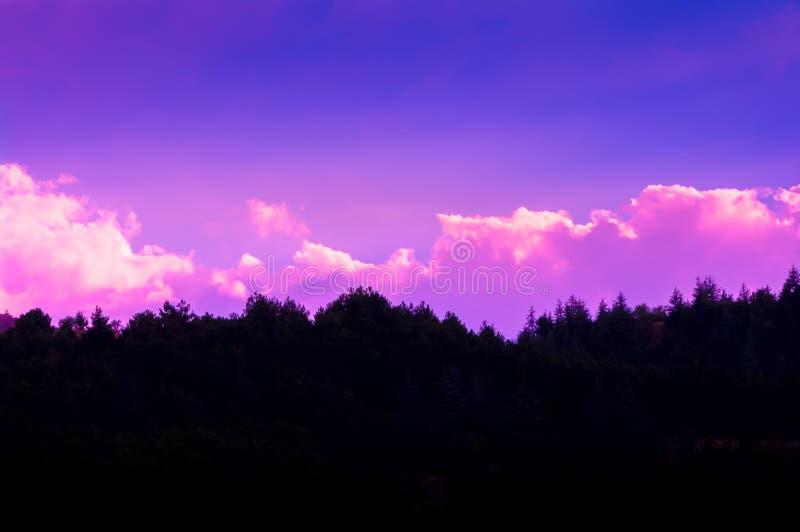 Il tramonto si appanna la foto con la siluetta dell'abetaia fotografia stock libera da diritti