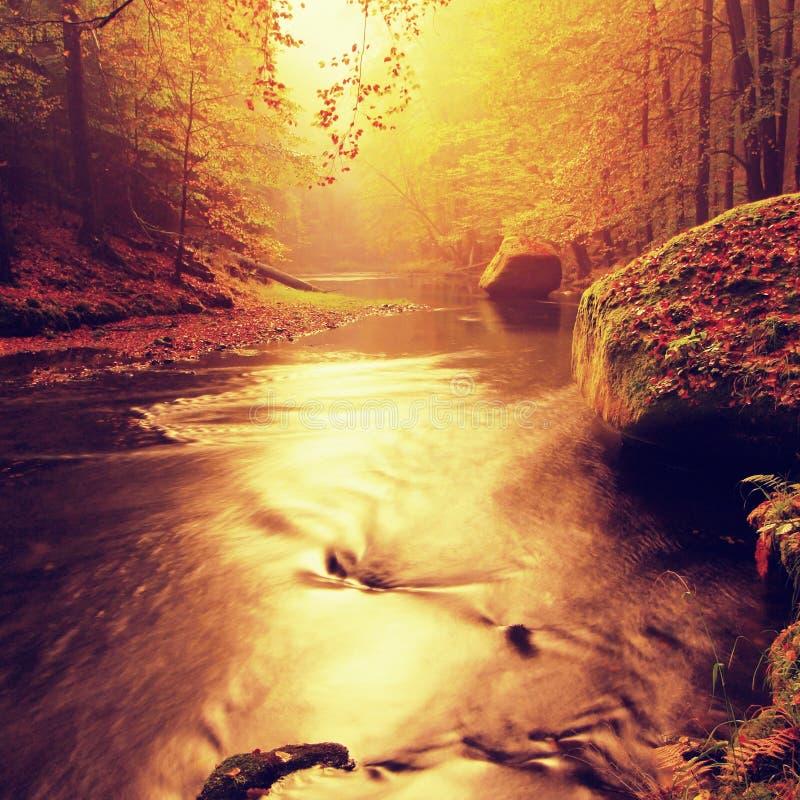 Il tramonto sopra il fiume della montagna coperto dal faggio arancio va Rami piegati al disopra della superficie immagini stock libere da diritti