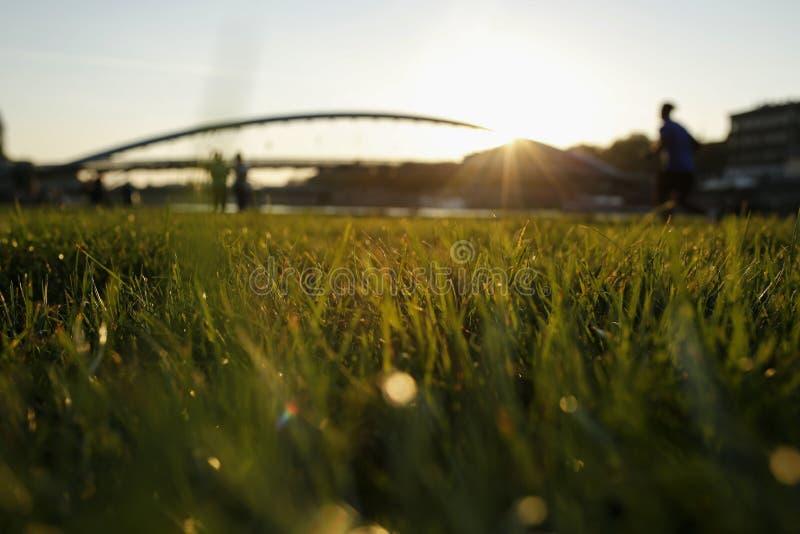 Il tramonto sui boulevard visti attraverso le lame di erba fotografie stock
