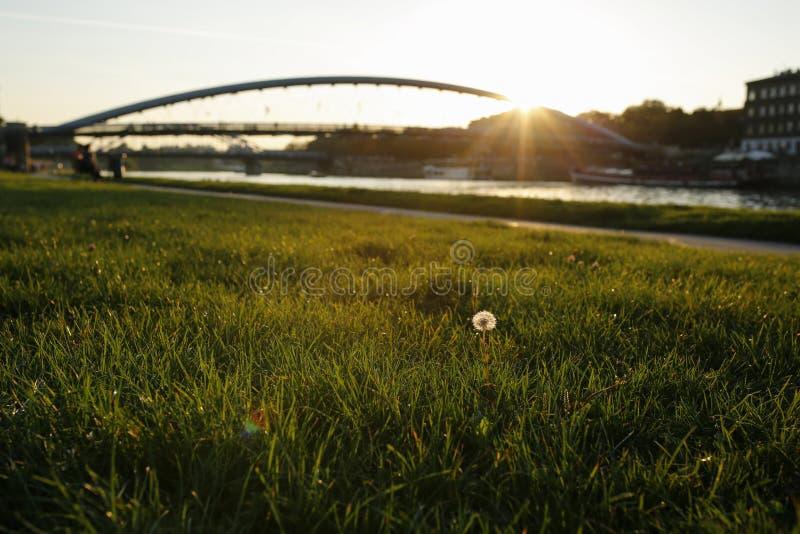Il tramonto sui boulevard visti attraverso le lame di erba immagine stock