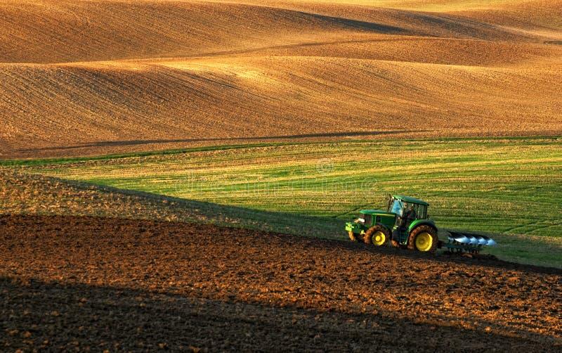 Il trattore ara un campo in primavera accompagnato dal trattore dei corvi fotografia stock