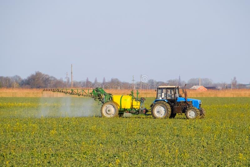 Il trattore fertilizza un giacimento del canola, spruzzante il fertilizzante con un trattore immagine stock