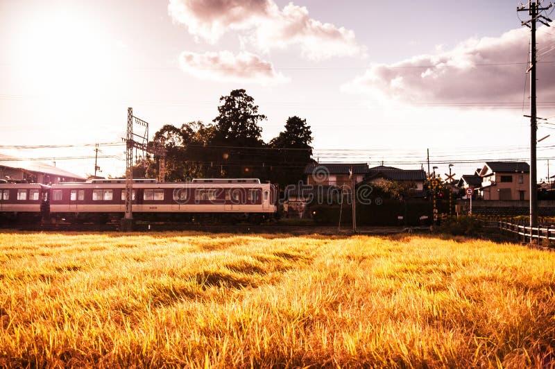 Il treno pendolare giapponese passa il giacimento del riso al tramonto fotografie stock libere da diritti