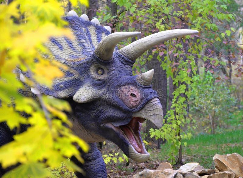 il triceratopo sveglio del dinosauro guarda fuori da dietro un cespuglio in un prato verde immagini stock libere da diritti