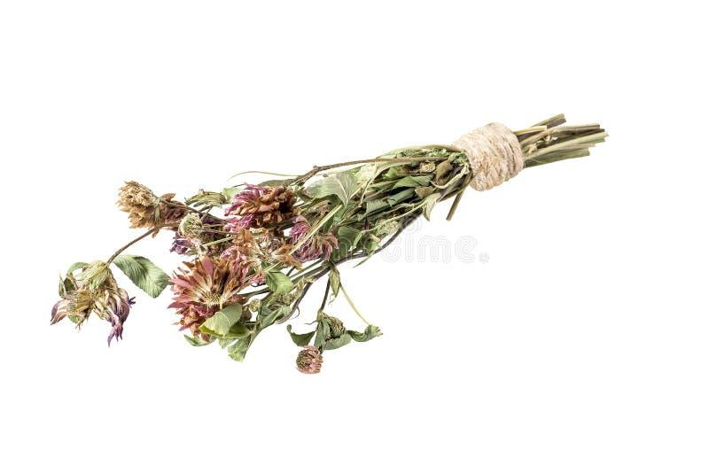 Il trifoglio asciutto fiorisce per tisana utile su un fondo bianco immagine stock libera da diritti
