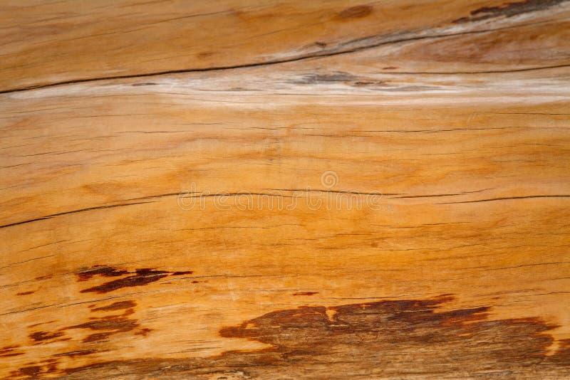 Il tronco del ginepro è primo piano immagini stock libere da diritti