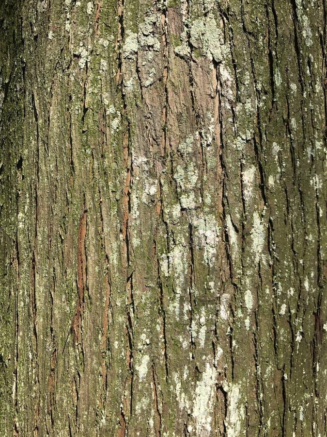 Il tronco ed il muschio immagine stock
