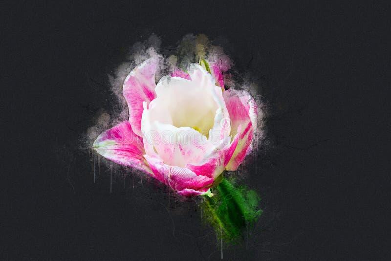 Il tulipano completo a maggio fotografie stock