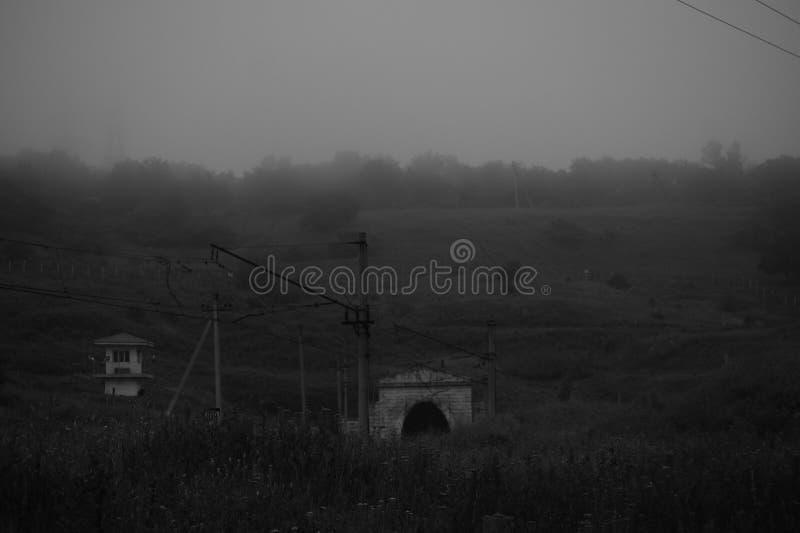Il tunnel nella foresta fotografie stock