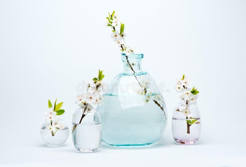 Il vaso e le bottiglie di vetro con la ciliegia bianca di fioritura fiorisce immagini stock