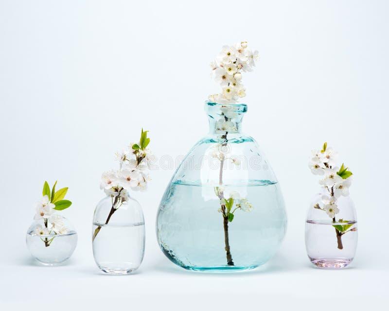 Il vaso e le bottiglie di vetro con la ciliegia bianca di fioritura fiorisce fotografie stock libere da diritti
