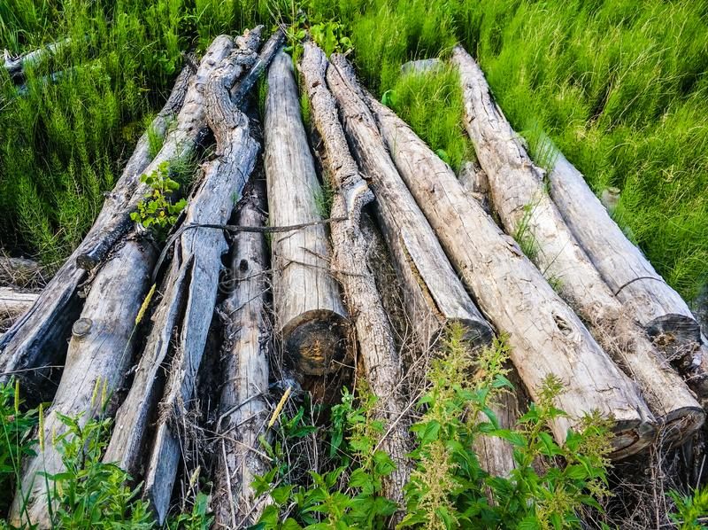 il vecchio albero asciutto collega l'erba verde nella prospettiva immagine stock