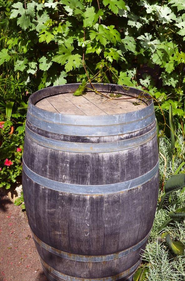 Il vecchio barilotto di legno d'annata sull'uva lascia il fondo nella vigna di Tenerife, isole Canarie fotografia stock