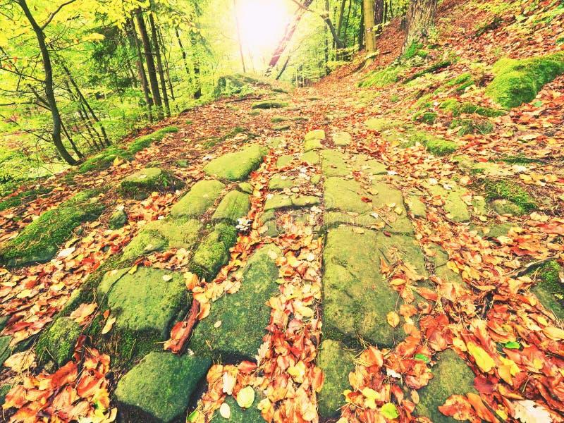 Il vecchio modo della pietra del ciottolo ha allineato dagli alberi di faggio in burrone profondo in foglie arancio fresche della immagini stock libere da diritti