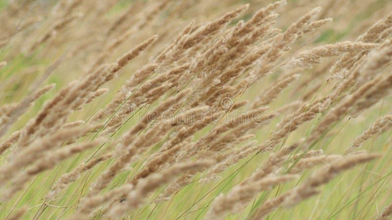 Il vento nella prateria fotografia stock