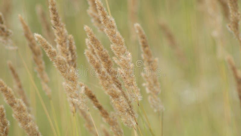 Il vento nella prateria immagine stock