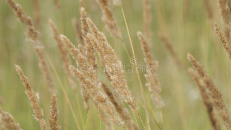 Il vento nella prateria fotografia stock libera da diritti