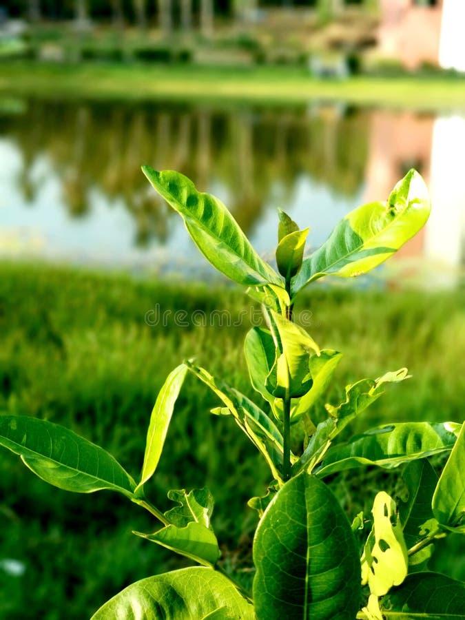 Il verde fotografia stock libera da diritti