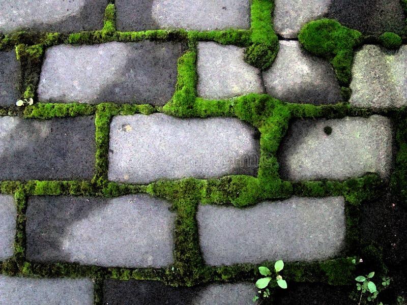 Il verde di muschio si accumula intorno ai mattoni grigi immagini stock libere da diritti