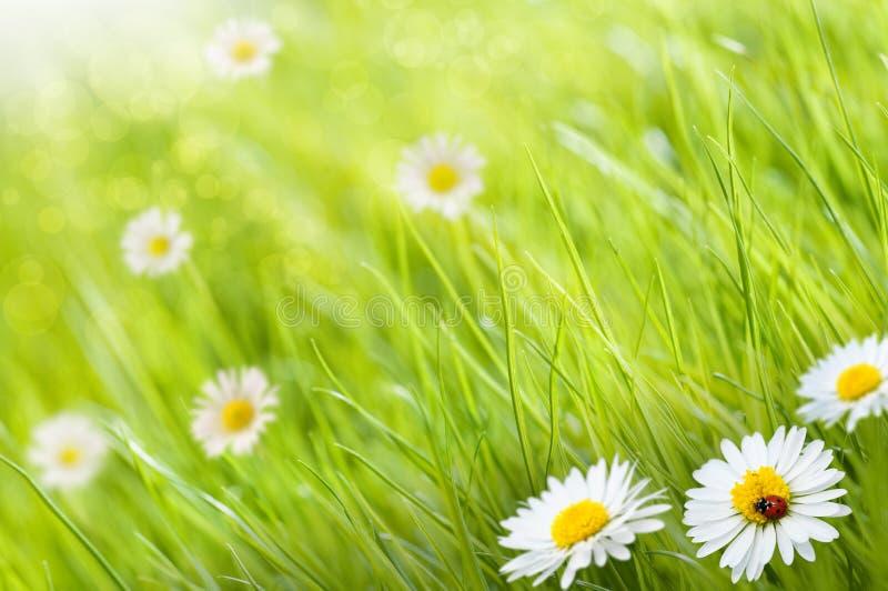 Il verde fiorisce la priorità bassa fotografia stock libera da diritti
