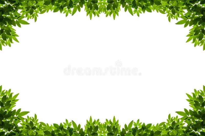 Il verde lascia il blocco per grafici isolato su priorità bassa bianca royalty illustrazione gratis
