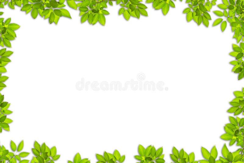 Il verde lascia il blocco per grafici immagine stock libera da diritti