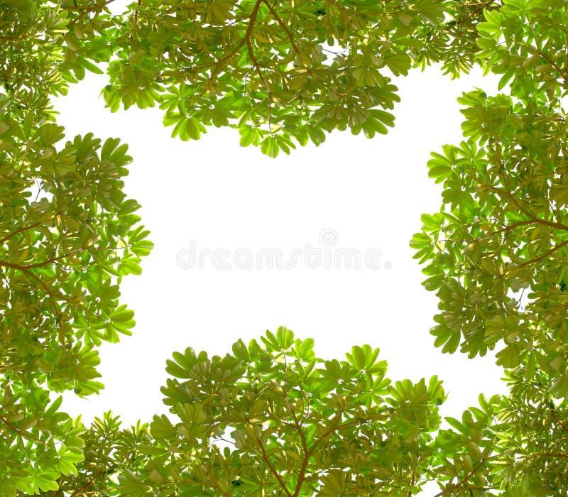 Il verde lascia la pagina fotografia stock