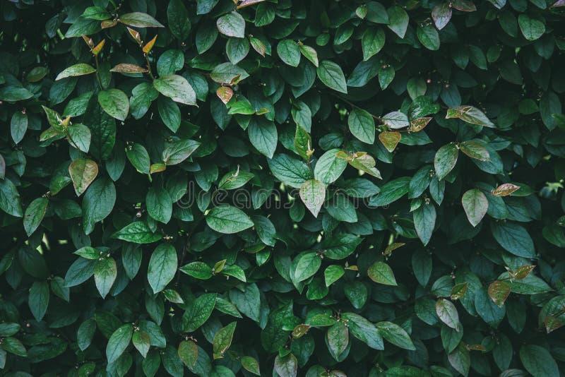 Il verde lascia la priorità bassa Natura e fine organica del fogliame su struttura astratta fotografia stock libera da diritti