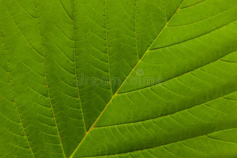 Il verde lascia la priorit? bassa immagini stock