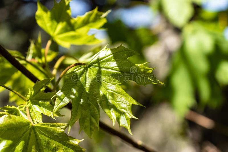 Il verde lascia la priorit? bassa fotografia stock libera da diritti