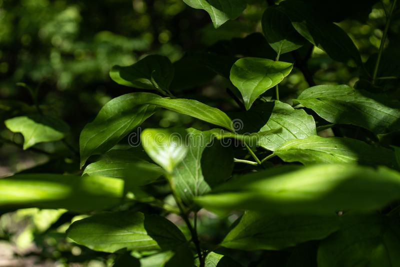 Il verde lascia la priorit? bassa fotografie stock libere da diritti