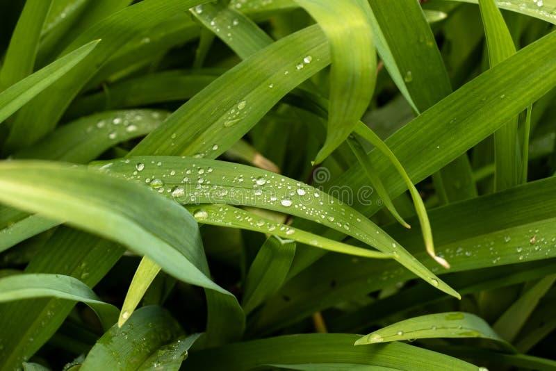 Il verde lascia la priorit? bassa fotografie stock