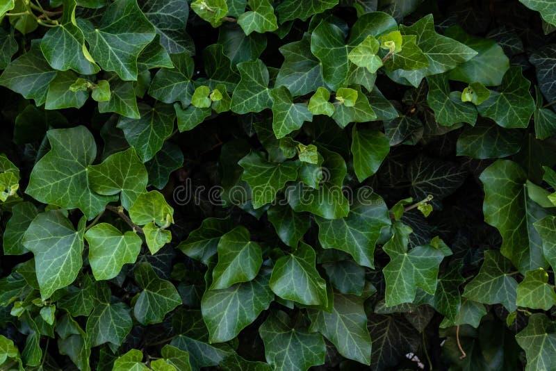 Il verde lascia la priorit? bassa fotografia stock