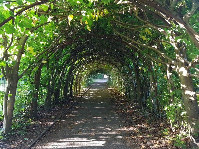Il verde naturale si piega un percorso fotografia stock