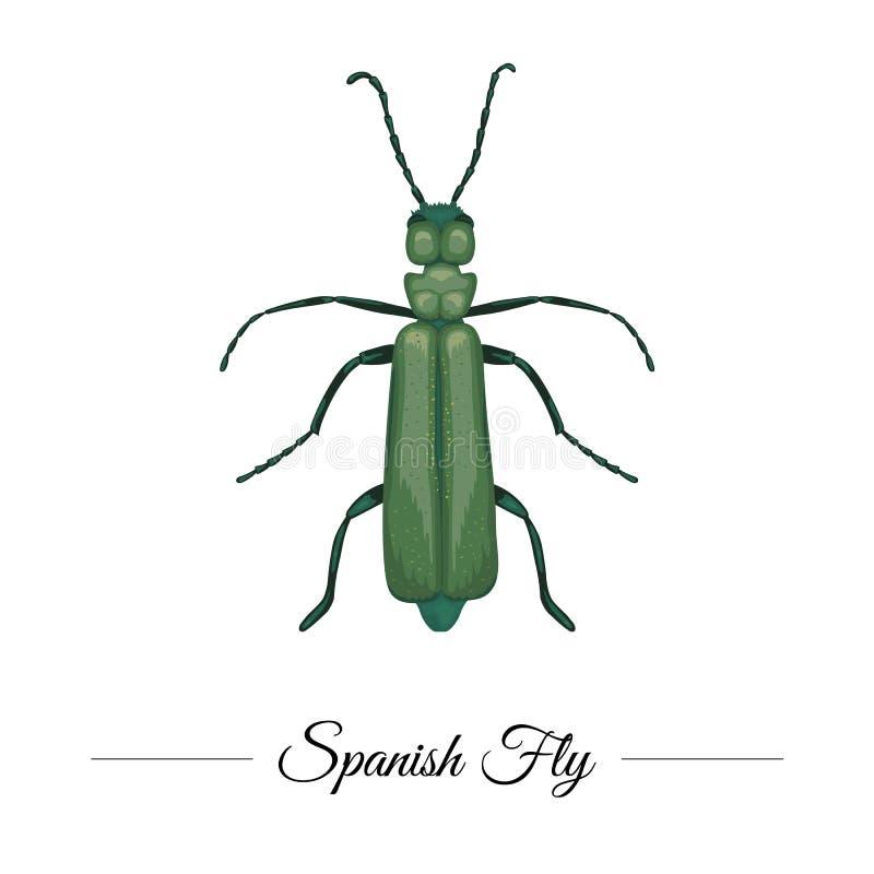 Il vettore disegnato a mano ha colorato il cantaride verde tropicale isolato su fondo bianco Logotype di tema tropicale per proge illustrazione di stock