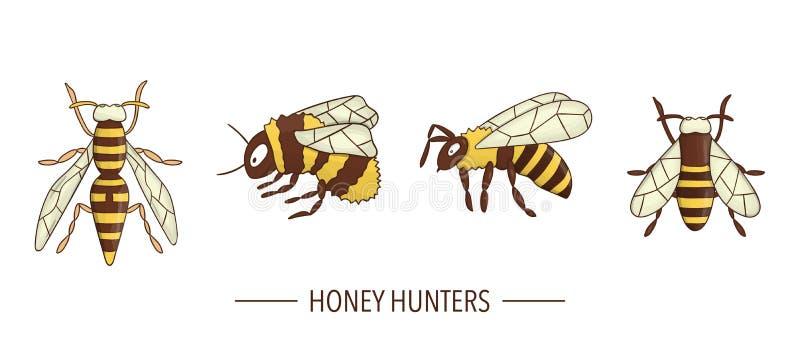 Il vettore ha colorato l'ape, bombo, icone della vespa isolate su fondo bianco illustrazione vettoriale