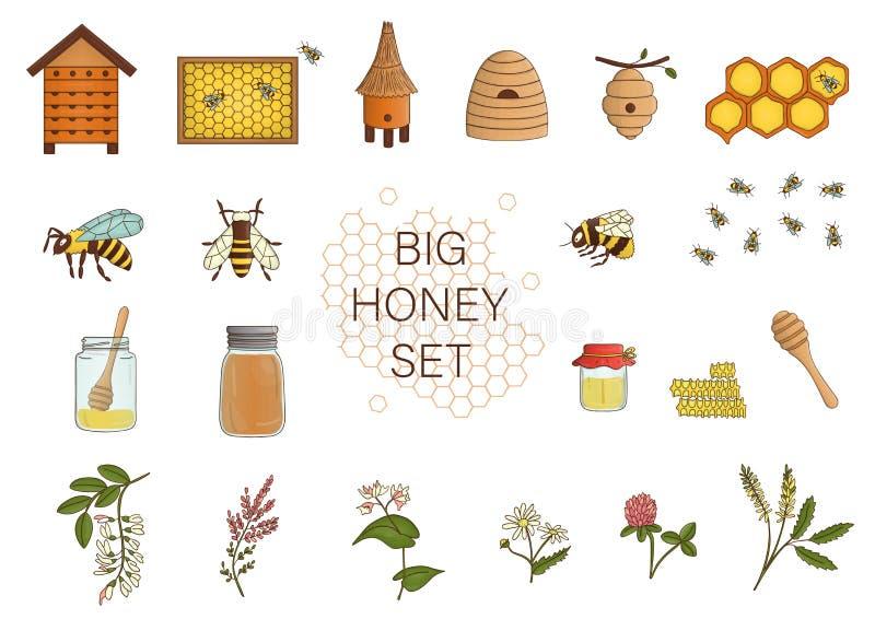 Il vettore ha colorato l'insieme di miele, ape, bombo, alveare, vespa, arnia, fiori del prato illustrazione vettoriale