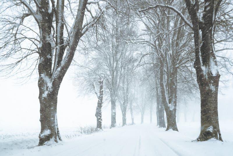 Il viale ha allineato dagli alberi nudi nella tempesta della neve, wint rurale del paese immagine stock