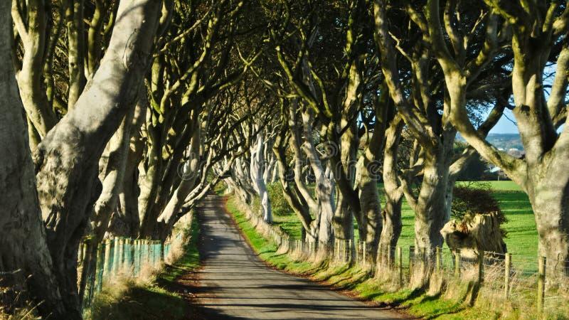 Il vicolo scuro delle barriere in Irlanda del Nord fotografia stock libera da diritti