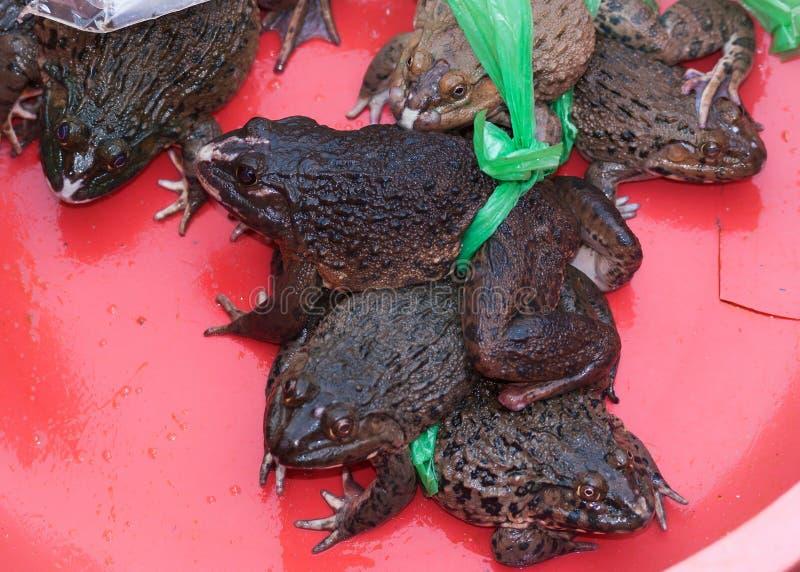 Il Vietnam Dong Hoi - rane viventi densamente grasse da vendere al mercato. fotografie stock libere da diritti