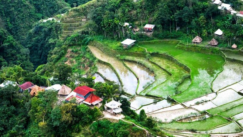 Il villaggio alloggia vicino ai campi dei terrazzi del riso Banaue, Filippine immagini stock