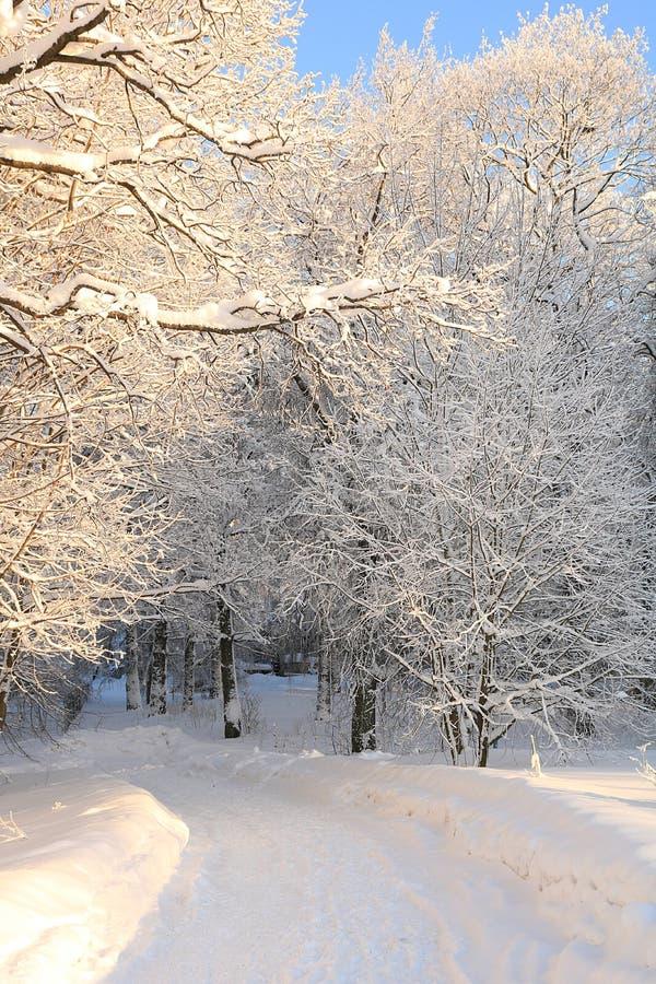 Il villaggio russo nell'inverno dopo precipitazioni nevose, i rami degli alberi è coperto di neve e di scintilla al sole immagine stock