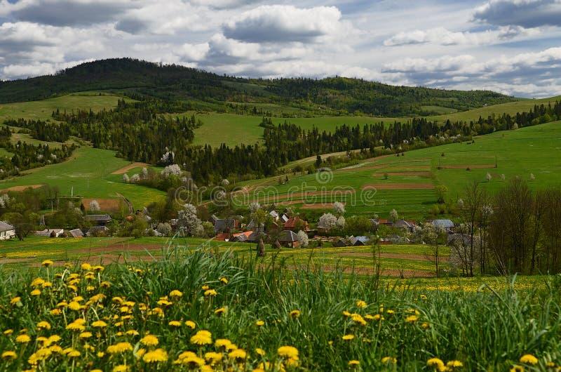 Il villaggio ucraino montagnoso pittoresco è circondato dai fiori della molla fotografie stock