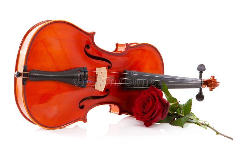 Il violino ed è aumentato fotografia stock libera da diritti